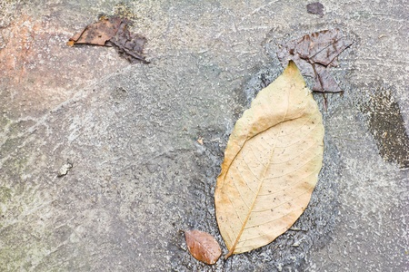 dry leaf on a way photo