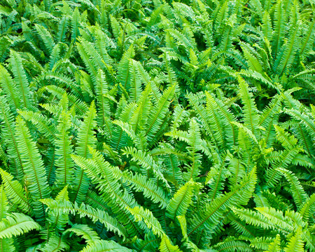 Fresh green ferns texture background