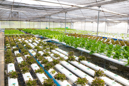 Organic hydroponic vegetable garden farm photo