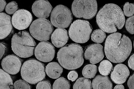 Background of cut wood logs stacked photo