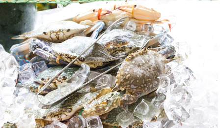 blue swimmer crab: fresh blue crabs in the ice, seafood