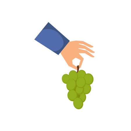 Hand holding a bunch of grape isolated on white background. Flat style. Vector illustration