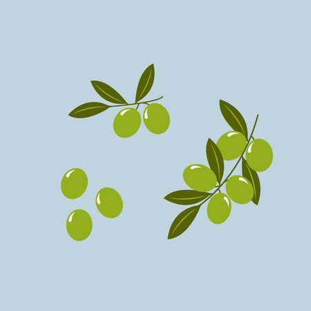 Olive branch with olives isolated on background. Vector illustration Illusztráció