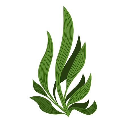Spirulina algae Underwate. Vegetarian food.  Plant vector Illustration.  イラスト・ベクター素材
