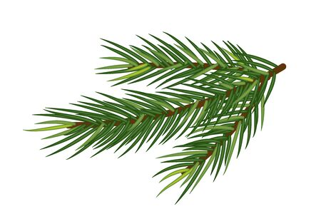 Realistic Spruce or Christmas tree branches, Christmas and New Year. Vector Isolated on white background