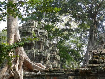 siem reap: Ta Prohm, Siem Reap Province, Cambodia Stock Photo