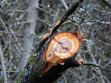 in bavaria: Trees near Waldbrunn, Bavaria, Germany