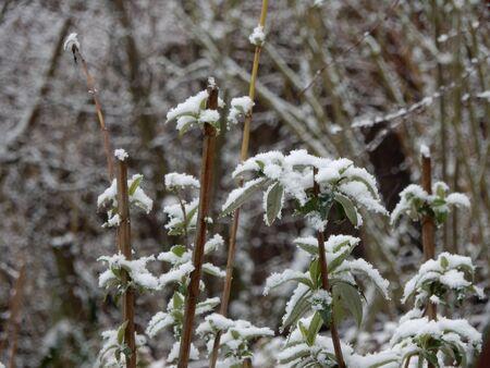 natures: nature with snow, Waldbrunn, Wuerzburg, Bavaria, Germany Stock Photo