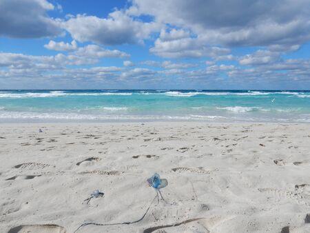 varadero: Varadero beach with Jellyfish, Cuba