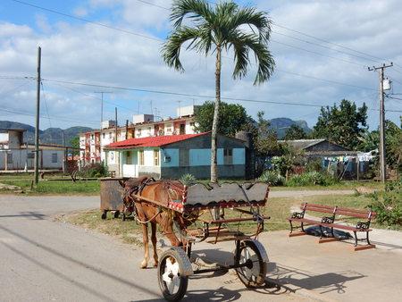 horse cart: horse cart in Vinales, Cuba