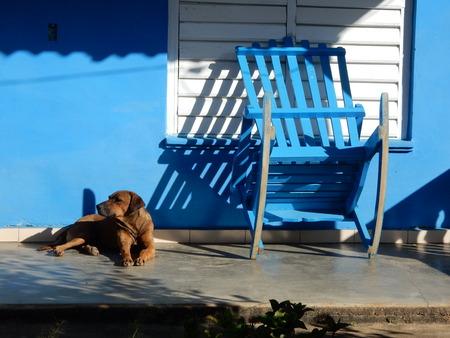 bilding: A dog outside a blue bilding, Vinales, Cuba