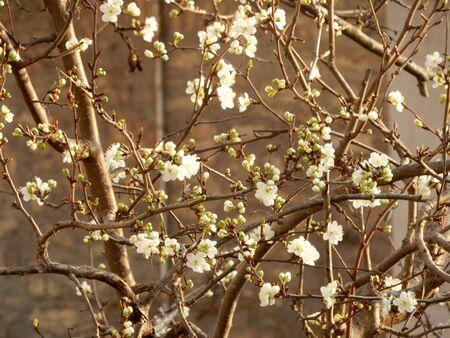 umbria: flowers blossom in Gubbio, Umbria, Italy