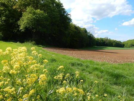 fields in Waldbrunn near Wurzburg, Franconia, Bavaria, Germany