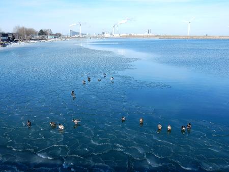 mallards in Amager strand in winter with frozen sea, Copenhagen, Denmark 写真素材