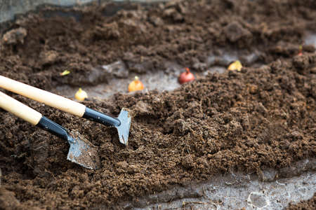 Rake and a shovel are inserted into the ground from the garden