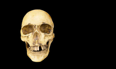 A model of a human skull on a black background Banque d'images