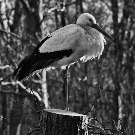 A view of a White Stork at Martin Mere Nature Reserve Banque d'images - 131430670