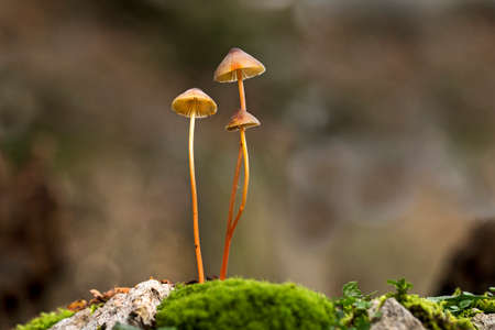 Three Small mushrooms in forest