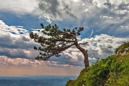 Lonley tree on downgrade wih dramatic sky
