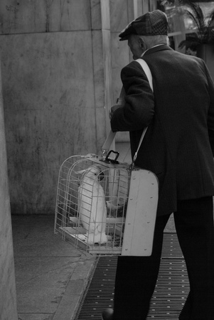 A man who takes his parrot in a cage for a walk around Milan