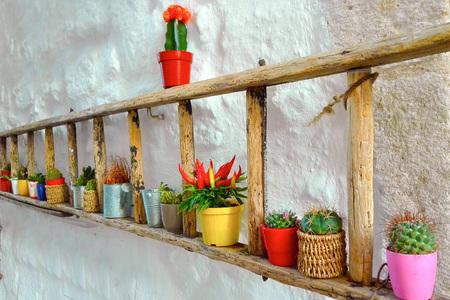 An original holders of plants in a street of Otranto - Puglia
