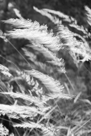 Mountain wild grass in a windy day Stock Photo