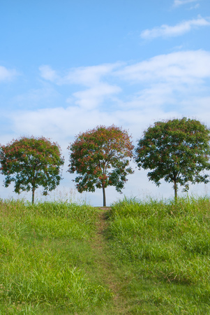Trees on the top of hill with path of green trampled grass and blue sky Banco de Imagens