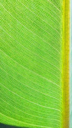Close-up of fibers of leaf with sinuous lines