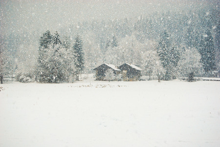Wooden houses and pines under a spectacular day of falling snow