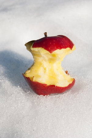 A ripe red apple with many bites placed on the snow