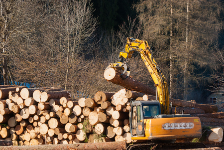 Lumberjack heaps the heavy trunks of trees cut with mechanical pliers Imagens - 113631566