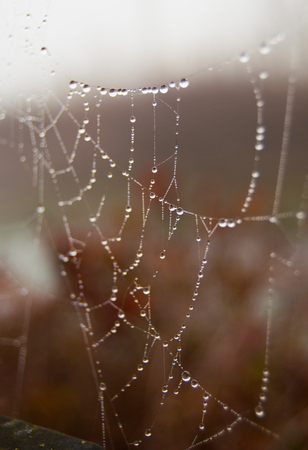 Many small drops hanging on a partially destroyed spider web Stockfoto