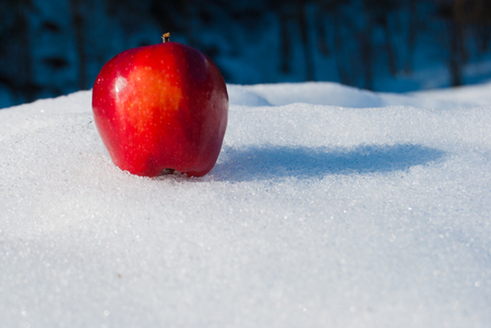 Close up of a single ripe red apple placed on the snow