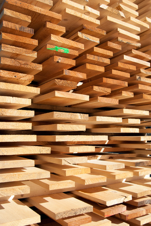 Planks of raw wood neatly arranged for drying