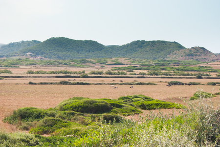 Panoramic view of the agricultural fields of the Spanish island of Minorca 스톡 콘텐츠