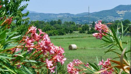 Views of the hilly and natural Italian landscape with single hay bale and oleander flowers that frame
