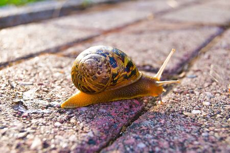 A single snail crawls on the floor illuminated by sunlight at the end of the day