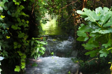 Small river with small waterfall that crosses into the dark forest illuminated by sunlight