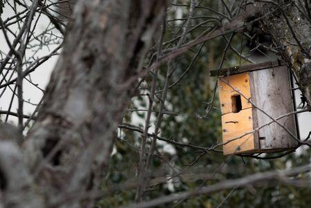 Orange wooden nest hung between branchies