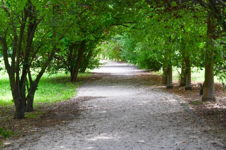 Walkway runs through many trees with green leaves and illuminated by sunlight