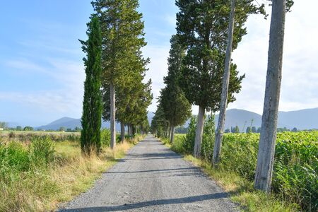 Straight path bordered on both sides by green trees and cultivated fields and with a hilly landscape as a background 스톡 콘텐츠