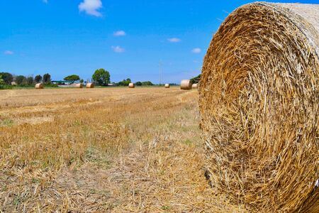 Closeup of a bale of hay and circular left on a field to dry in Tuscany 스톡 콘텐츠