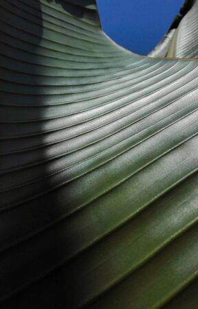 Close-up of leaf fibers with sinuous lines that seems to be a futuristic architecture of a skyscraper