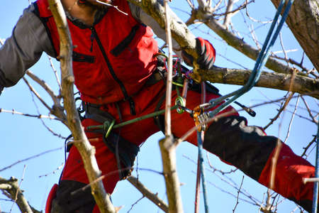 Boy in technical clothes and harness over bare tree during high-shaft winter tied with a safety rope