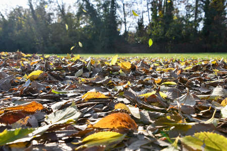 Close-up countersuns of brown and orange and yellow leaves on the ground and others falling 스톡 콘텐츠