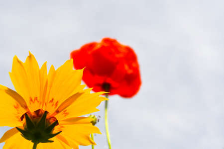 Close-up of a flower seen from below placed in the corner of the frame that has as its background another flower and the cloudy white sky 스톡 콘텐츠