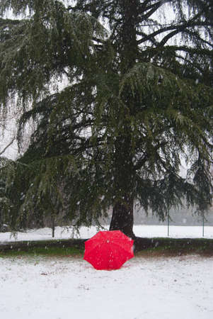 Single red umbrella in contrast with the snow and green fir