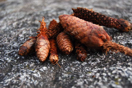 Group of pine cones crunched by squirrels on a granite stone