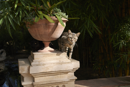 Palermo, Italy - September 06, 2018 : View of a cat in a garden