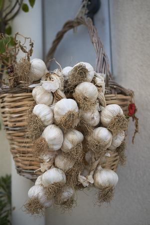 Garlic heads in a basket
